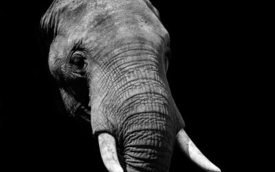 Is this the elephant in the room for demand response?